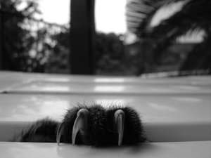 catbycyclopse.jpg