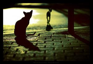 streetsurvivorsbygilad1.jpg
