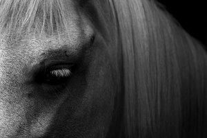 horseserieszerdabysolak11.jpg